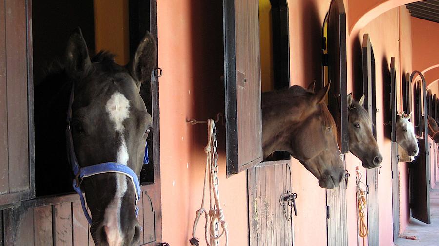 pferde mit gef hrlichem virus infiziert apotheke adhoc. Black Bedroom Furniture Sets. Home Design Ideas