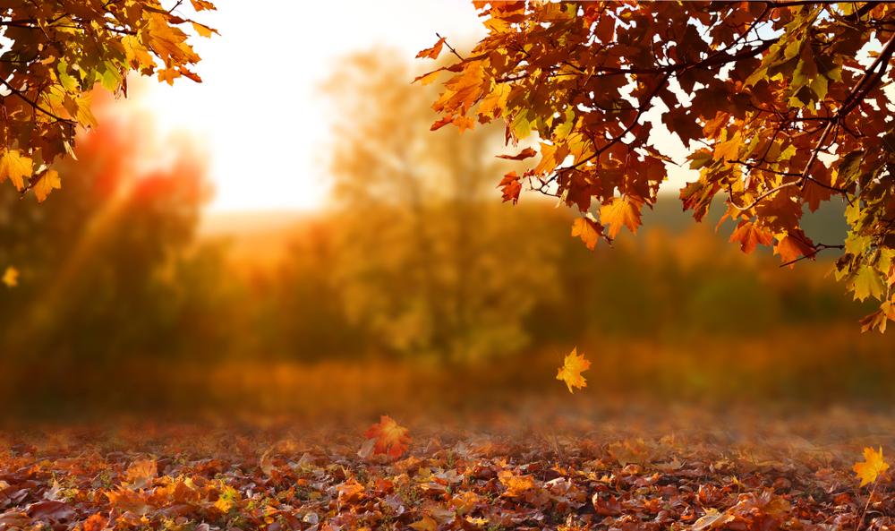 Corona Im Herbst